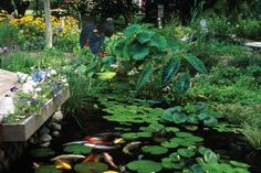 Find plants for your pond or water garden with aquatic plant picks and growing tips from the experts at HGTV Gardens.