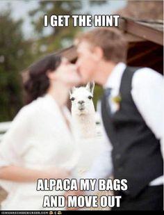 Hahahahahahahahaha.