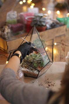 "Sady na výrobu DIY set + terárium ""Patronus"" / od GreenStories | Fler.cz Diy Terrarium Kit, Decorative Pebbles, Succulent Soil, Christmas Gift Sets, Gifts For Office, New Home Gifts, Glass Containers, Diy Kits, Etsy"