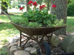 I love putting old things in my front bed. Have been trying to get as many perennials established as possible but still love geraniums.