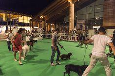 Dogs Day 2016 - Esposizione Canina