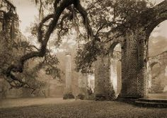 Old Sheldon Church Ruins, Beaufort, SC.  Always stopped here on the road to Fripp Island growing up. So beautiful, and a little haunting. saracapers
