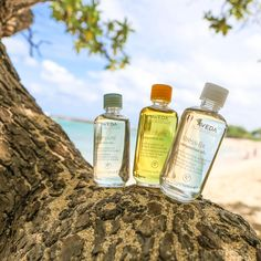 Treat your skin and senses to the iconic aromas of our Composition Oils: Shampure, Beautifying, and Stress-Fix.