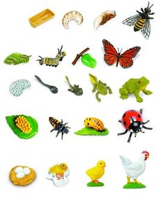 Life Cycle of a plant, turtle, worm, rooster, lady bug, butterfly, bee, silk worm, ant, praying mantis, salamander, and mealworm. Cut, paste and hot glue to popsicle sticks.
