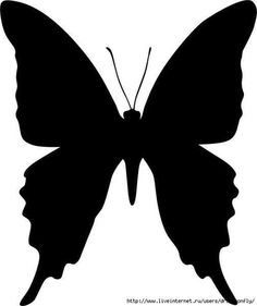 Butterfly template …