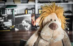 Seit 2013 wird immer am 10. August der sogenannte Welt-Löwen-Tag, der World Lion Day begangen um auf die Gefährdung der Löwen…
