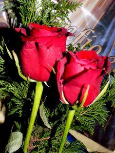 Fotografía: color complementario. Dominante: las rosas  subdominante: los tallos  Subordinado: lo verde de atrás