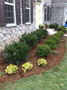 beautiful front yard landscaping ideas for your home 23 > Fieltro.Net beautiful front yard l Boxwood Landscaping, Small Front Yard Landscaping, Garden Shrubs, Outdoor Gardens, Backyard, Landscaping Plants, House Landscape, Front House Landscaping, Farmhouse Landscaping