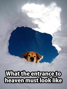 ...considering this is an avalanche rescue training hole...
