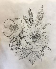 Hellebore Sketch