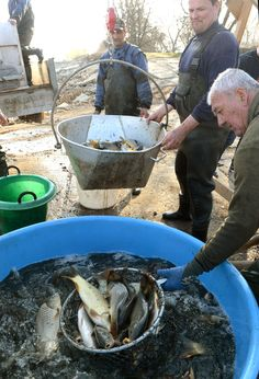 Following a severe winter, fish stocks are being moved out of hibernation chambers and into the lakes of Perín-Chym, below Košice. By autumn, fishermen should expect promising results. Photos: TASR