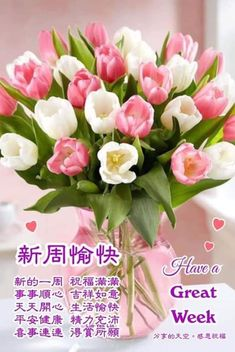 Great Week, Morning Wish, Rose, Flowers, Plants, Chinese, Pink, Plant, Roses