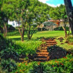 Garden steps. #garden #landscape #scenery #outdoors #hawaii