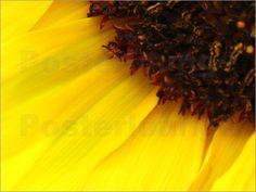 """Bild von JUSTART - """"Sonnenblume"""""""