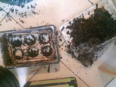 Tri des vers. Récupération compost mûre. Compost, How To Dry Basil, Herbs, Food, Herb, Meals, Spice, Composters