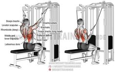 Lats - Build your back and arm muscles and develop upper-body strength using the double cable neutral-grip lat pull-down, a major compound exercise. Gym Back Workout, Good Back Workouts, Cable Workout, Biceps Workout, Plank Workout, Back Exercises, Workout Guide, Fitness Workouts, Fitness Gym