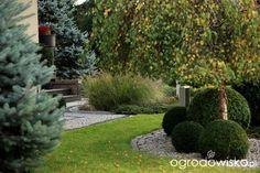 projekt kompozycji pod drzewem ogrodowisko - Szukaj w Google