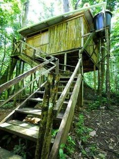 Chataniere Lodge Tree House at 3 Rivers Dominica Eco-Lodge. $70/night, composting toilet, bamboo treehouse, hammock.
