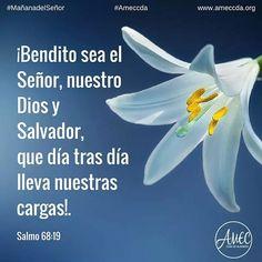 Spiritual Messages, Spiritual Life, Bible Encouragement, Scripture Quotes, Bible Guide, Biblical Verses, Scriptures, Jesus, God Prayer