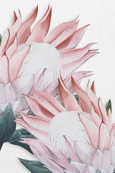 This painting was originally painted byAnne-Marie Bloor. Anne-Marie is an artist as well as a Graphic Designer so using her skills she scanned the painting then when on computer the Protea flower was duplicated and arranged. Protea Art, Protea Flower, Acrylic Painting Flowers, Watercolor Flowers, Watercolor Paintings, Download Art, 3d Rose, Painting Wallpaper, Wallpaper Ideas