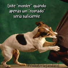 """EVS Araguaia - Alphaville: .:.fb.com/vidaativaesaudavel Se um cão fosse seu professor, você aprenderia coisas como:  Evite """"morder"""" quando apenas um """"rosnado"""" seria suficiente. #vidaativaesaudavel #focoemvidasaudavel #love"""