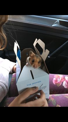 My cute hamster Cocoa Awww she's not mine tho Cute Baby Animals, Animals And Pets, Funny Animals, Beautiful Cats, Animals Beautiful, Funny Hamsters, Baby Hamster, Syrian Hamster, Cute Rats