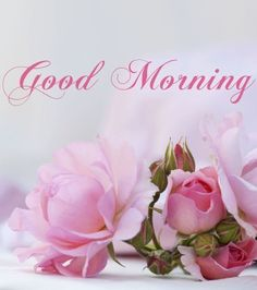 472 best Good Morning Gif photos by sonusunariya Good Morning Cards, Morning Morning, Good Morning Flowers, Good Morning Picture, Good Morning Messages, Morning Prayers, Good Morning Good Night, Morning Pictures, Good Morning Wishes