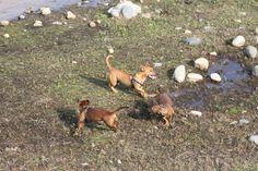 3 cani in cerchio con acqua