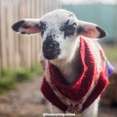 Esta es la carita de Sofía una bebé más que la cruel industria de la carne iba a asesinar para abastecer las carnicerías de nuestro país. No parece justo verdad?  Los animales que día a día se asesinan para producir carne leche y huevos son tan sensibles e inteligentes como los perros y gatos que forman parte de nuestras familias pero la industria ganadera se ha preocupado de que no lo sepamos para que sigamos comprando sus productos.  En nuestras manos está terminar con esta injusticia y…