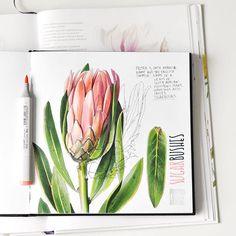 """Sugarbushes Издательство МИФ @mifbooks выпустило новую книгу Билли Шоуэлл """"Портреты цветов от А до Я"""". На страницах множество практических советов и вдохновения. Рекомендую всем любителям ботанической иллюстрации. А ещё сегодня у @nika_urubkova обсуждается интересный вопрос про то, как мы понимаем разницу между скетчем и всем остальным. Я называю свои работы зарисовками, потому что не делаю карандашного наброска и не вношу исправлений. По времени есть беглые и длительные картинки. ..."""