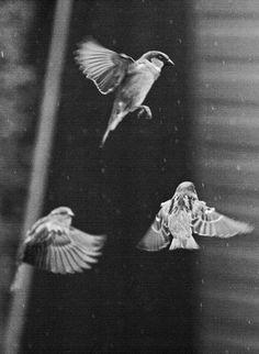 birds in my back garden (bystop,the,engine,stop,pretending)