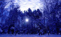 Winter sunburst in the forest HD Wallpaper