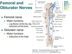 AccessPhysiotherapy - Lumbar and Sacral Plexus with Clinical Cases
