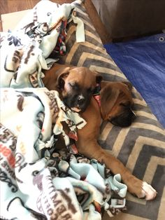 Boxer Puppies sleeping together #Sisters