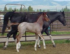Spotted Fawn Paint Horse Ranch - Foxfire