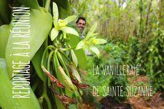Un œil à la Réunion : découvrez la Vanilleraie