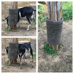 ONLY thing I've ever made for my goats that they ACTUALLY use. Plastic grass mat wrapped around post - held in place by screws with washers - for scratching!