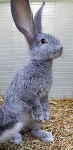 Blue{ish}, purple{ish} bunny!