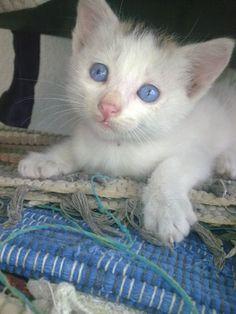 My blue eyed kitten
