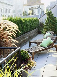 If planting on a balcony or upper level patio area concrete or terracotta planters offer a convenient solution for planting a privacy hedge or living wall. However, it is important that you check for any weight restrictions, as these types of pots are extremely heavy - without any soil or plants. Try to limit the number of pots and plant up foliage plants that have a wider spread. http://www.easydiy.co.za/index.php/garden/430-grow-a-living-privacy-screen