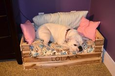 40+ DIY Pallet Dog Bed Ideas - Don't know which I love more   101 Pallet Ideas - Part 2