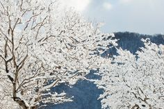 Image result for shisendo winter