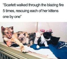 Not all heroes wear capes! Scarlett rescued all five of her kittens from a fire in 1995 - and lived another 13 years. After saving the kittens she was seen to touch each of her kittens with her nose to ensure they were all there 😭 : cats Happy Animals, Cute Funny Animals, Cute Baby Animals, Animals And Pets, Funny Cats, Cute Kittens, Cats And Kittens, Ragdoll Kittens, Tabby Cats