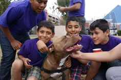 Buddy's Journey - A special pit bulls tells how he went from homeless to a certified therapy dog