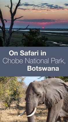 Chobe National Park Safari. Lots of safari photos and info about what it is like to go camping in Chobe.