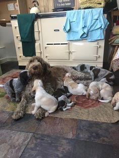 www.agahuis.nl Een prima plek om je pups te voeden....