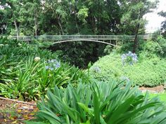 Wahiawa Botanical Garden covers elevations between 875 and 1,000 feet (267-305 m) above sea level.
