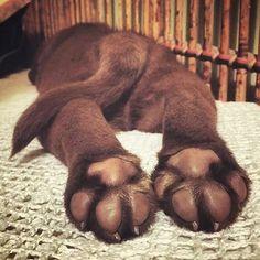 puppy feet, hehehe so sweet!