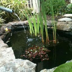 Water management peruvian style old school garden for Garden pond management