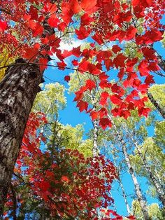 Crimson Foliage by James and Melissa Peterson Cool Pictures, Cool Photos, Beautiful Pictures, Mother Earth, Mother Nature, Road Trip Usa, Autumn Leaves, Red Leaves, Winter Trees